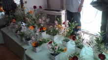 花の命 人のこころ-20100522110829.jpg