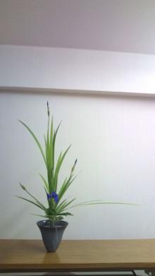 花の命 人のこころ-20100721221504.jpg