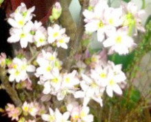 花作家 森直子の 花は愛